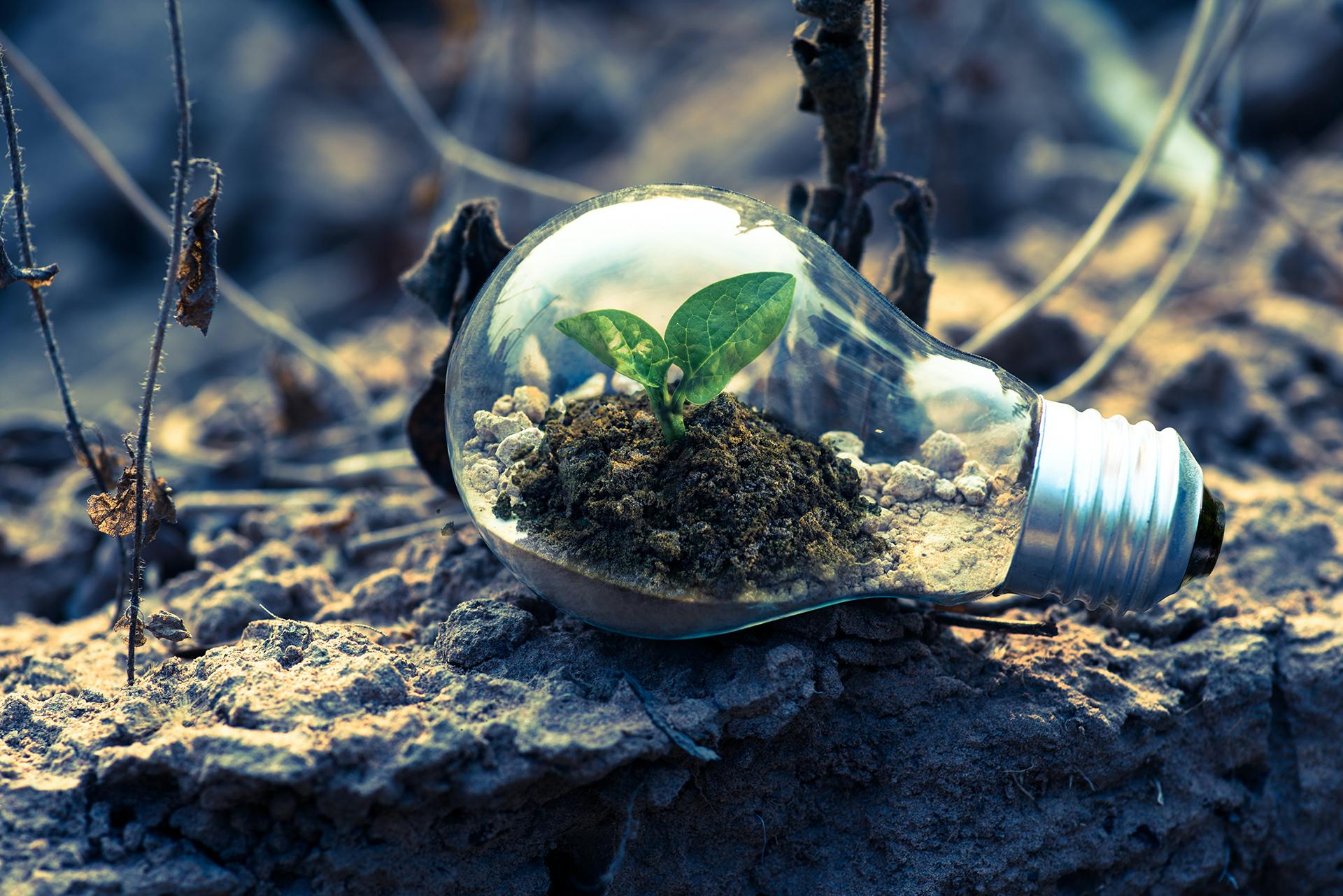 Pflänzchen in Glühbirne, erneuerbare Energie, grüne Energie